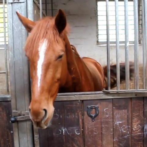 Er heißt, Jimmy;) - (Tiere, Pferde, Fellfarbe)