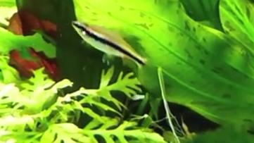 FISCHAQ - (Fische, Aquarium, Aquaristik)