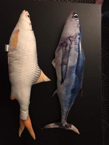Welche Fischarten sind das?