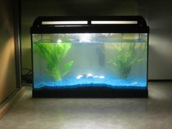 Welche Fische Fur Anfanger Aquarium