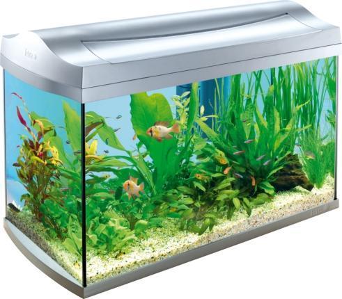 Aquarium Fische Aquaristik