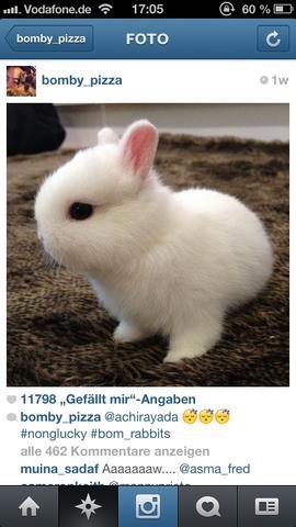 Das weiße Häschen  - (Tiere, Kaninchen)