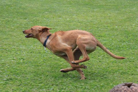zwei - (Hund, Rasse, Hunderassen)