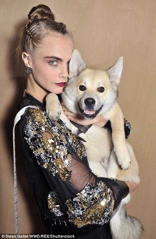 Leo - (Hund, Rasse)
