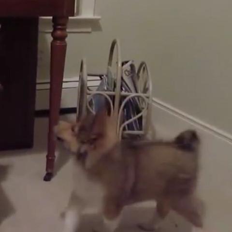 Süßer Hund (YouTube) - (Tiere, Hund, Welpen)