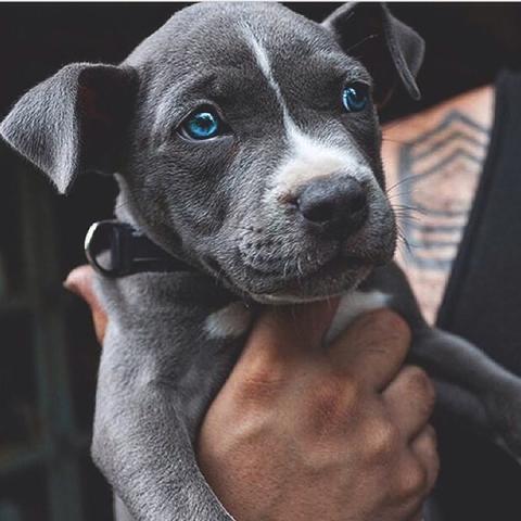 Der hier :) - (Hund, Farbe, Rasse)