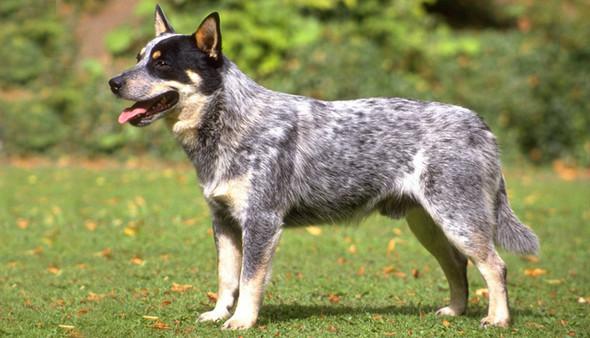 Hund - (Hund, Hunderasse)