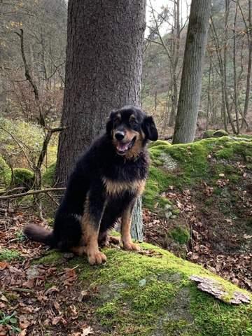 Hundepass 2021