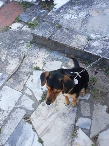 - (Hund, Welpen, Rasse)