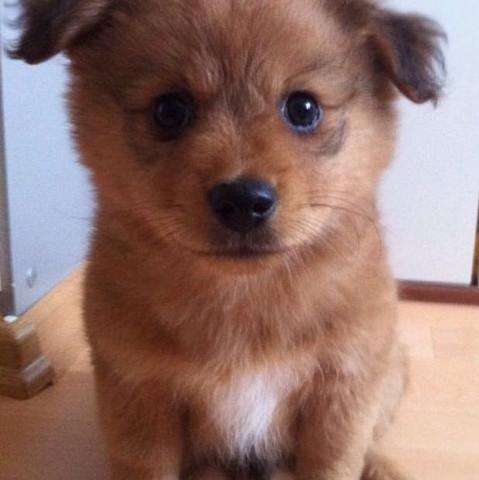 Das ist der Hund.  - (Hunderasse, mischung)