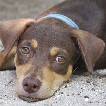 Bitte um Hilfe, welche Hunderasse ist das? oder nur mischling? - (Hund, Rasse, Mischling)