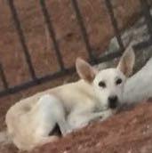 Dieser Hund - (Tiere, Hund, Rasse)