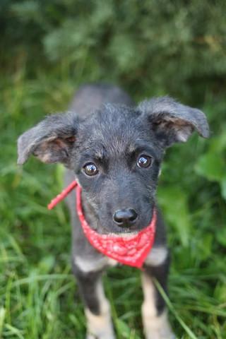 Hündin - (Hund, Hunderassen)