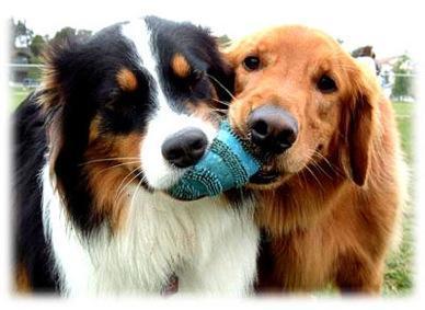 hunderassen - (Hund, Hunderassen)