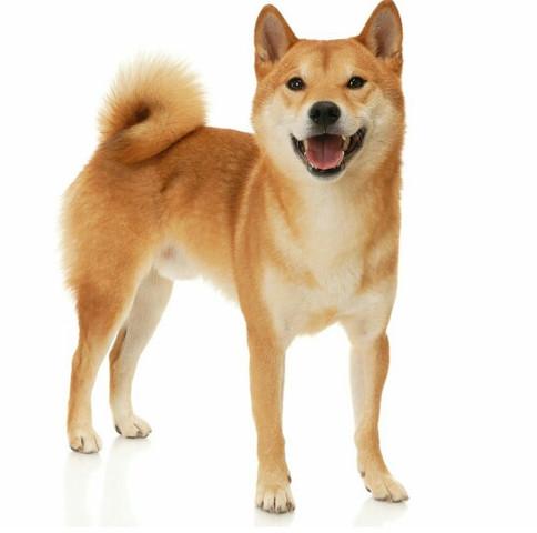 Welche Hunderassen Sind Die Besten Für Die Wohnung Hund Welpen