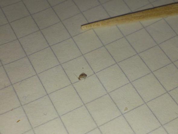 die war schon tot - (Haushalt, Insekten, Bett)