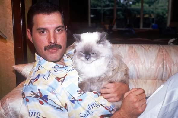 Welche ist eure Lieblingssingle aus Freddie Mercurys Solo Schaffen?