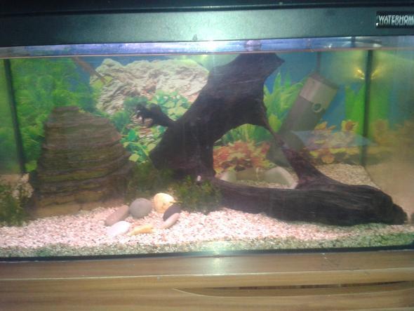 Mein Aquarium^^ - (Fische, Aquaristik)
