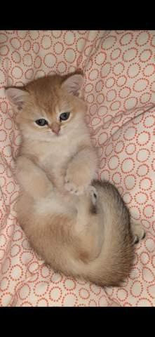 WElche Katze findet ihr süßer?