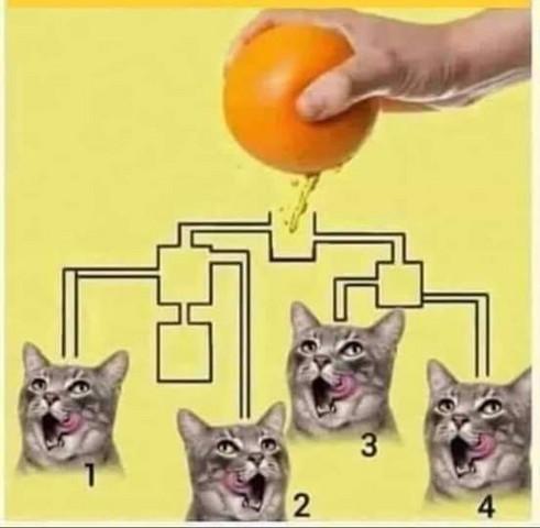 Welche Katze Trinkt Am Schnellsten Zuerst Haustiere Katzen Rätsel