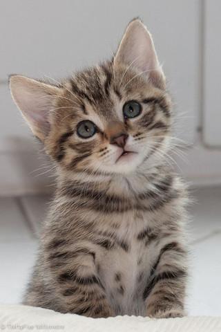 Katze von Pinterest - (Katze, Katzenart)