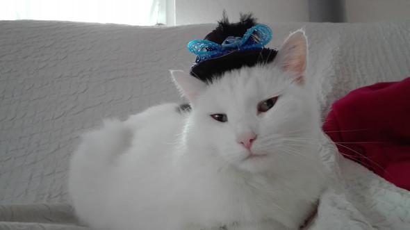 Diva!!! - (Katze, Katzenrasse)