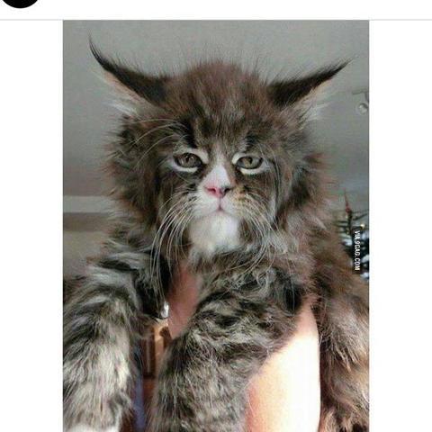 Bild  - (Tiere, Katze, Katzen)