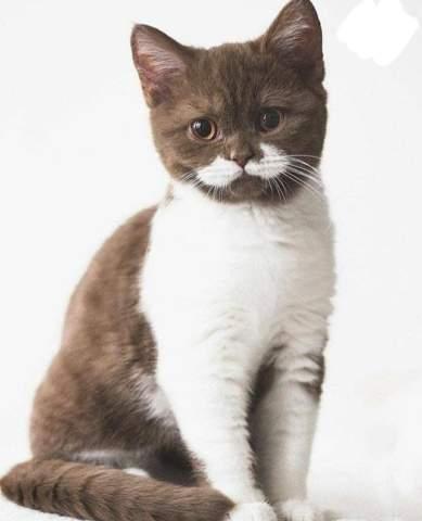 Welche Katzenrasse ist das / Suche Katzenrasse?