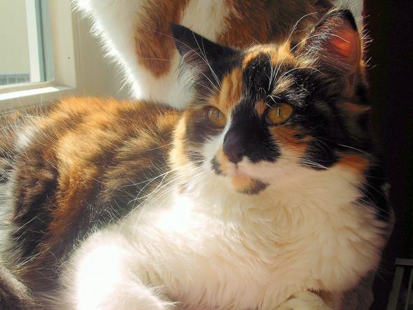 Miau - (Tiere, Katzen)