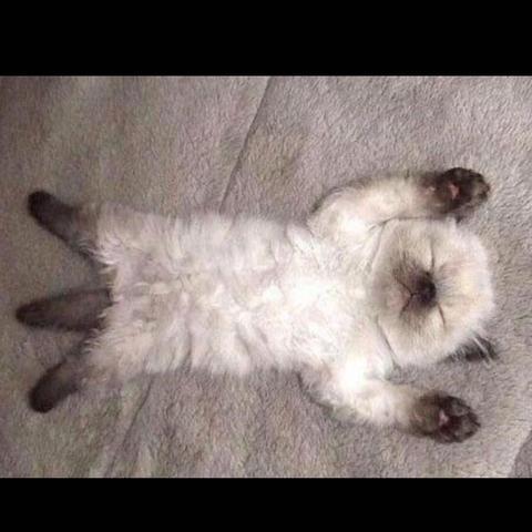 Das ist die Katze, die ich meine - (Tiere, Katze, Haustiere)