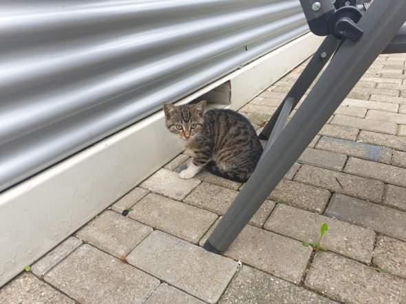 Welche Katzenrasse ist das (siehe Foto)?