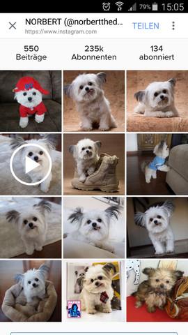 kleine Hunde  - (Hund, Hunderasse)