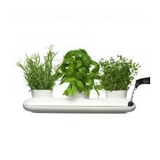 Welche Kräuter In Der Küche Ziehen Kochen Pflanzen