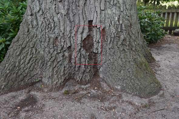 - (Biologie, Garten, Baum)
