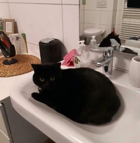 Welche Morgenrituale haben eure Katzen?