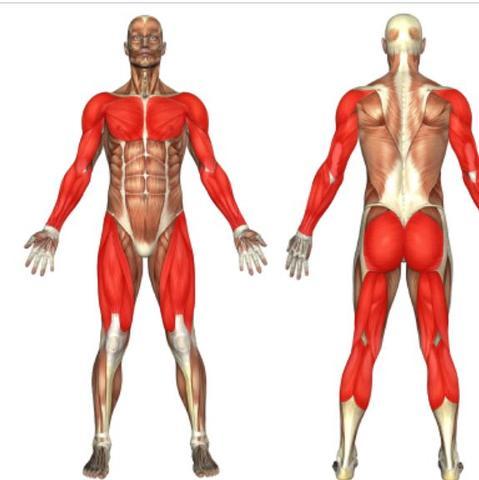 Welche Muskeln werden beim Tennisspielen aufgebaut? (Sport ...