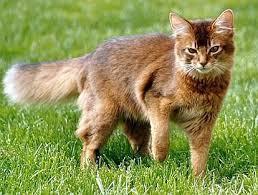 1 Katze  - (Name, Warrior Cats)