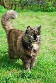 2 Katze  - (Name, Warrior Cats)