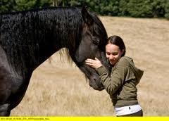 Welche Pferde Rasse? - (Pferde, reiten, Pony)