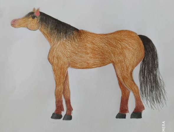 Welche Pferderasse ist das?