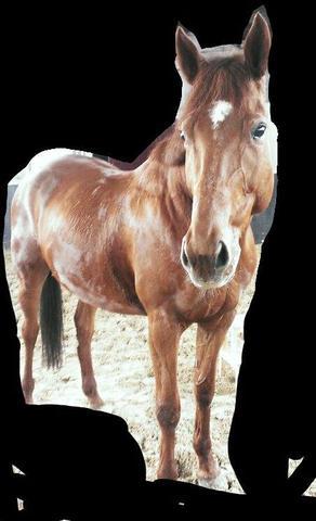 Pferd - (Pferde)