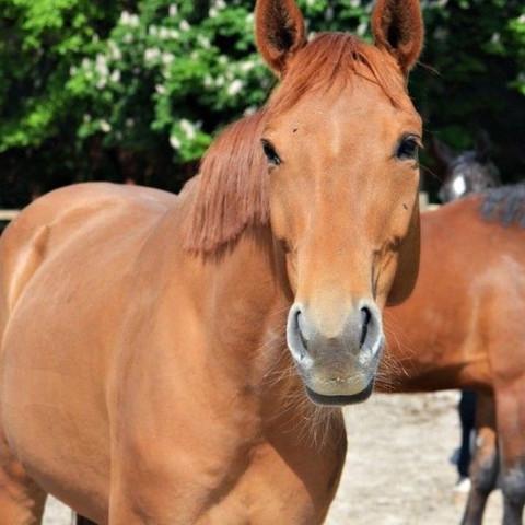 ... :) - (Pferde, Rasse)