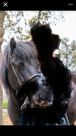 Pferd1 - (Pferderassen, Pferdefotos, Pferdeliebhaber)