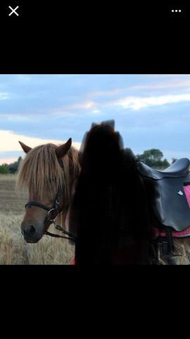 Pferd2 - (Pferderassen, Pferdefotos, Pferdeliebhaber)