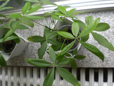 Welche pflanze  Welche Pflanze ist das? Giftige Pflanzen für Katzen (Giftpflanzen)