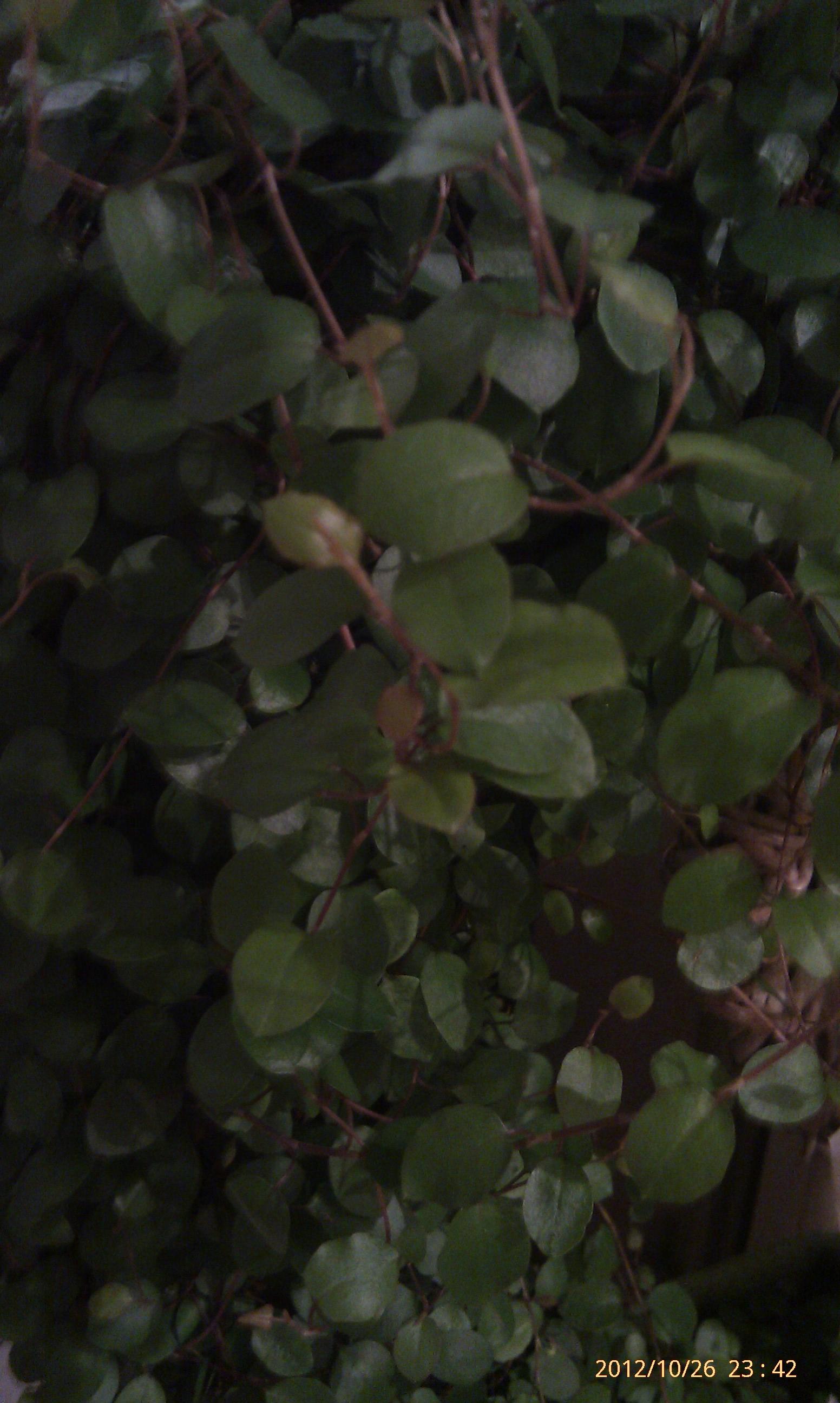 welche pflanze ist das mit bild biologie pflanzen pflege. Black Bedroom Furniture Sets. Home Design Ideas
