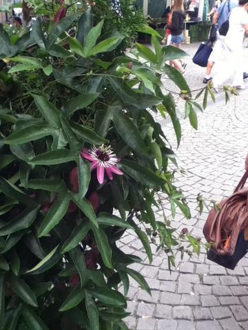 Blüte und Blätter - (Garten, Pflanzen, Botanik)