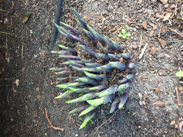 Pflanze - (Garten, Pflanzen)