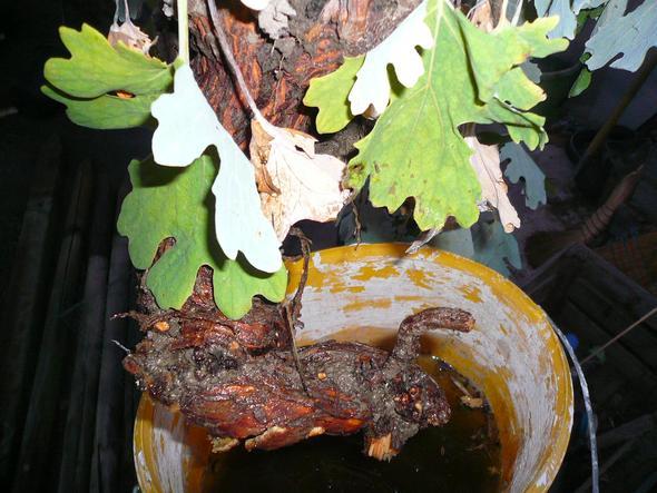 bild - (Bilder, Pflanzen, erkennung)