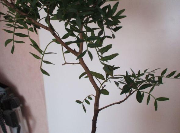 Pflanze - (Pflanzen, Baum, Botanik)